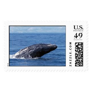 Humpback whale breach stamp