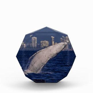 Humpback Whale Breach Surfers Paradise Australia Award