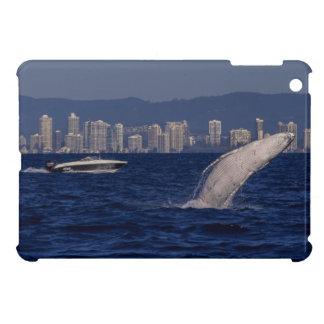 Humpback Whale Breach Surfers Paradise Australia iPad Mini Cover