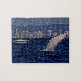 Humpback Whale Breach Surfers Paradise Australia Jigsaw Puzzle