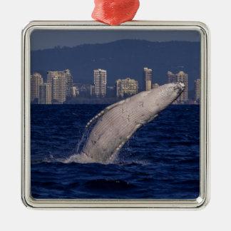 Humpback Whale Breach Surfers Paradise Australia Metal Ornament