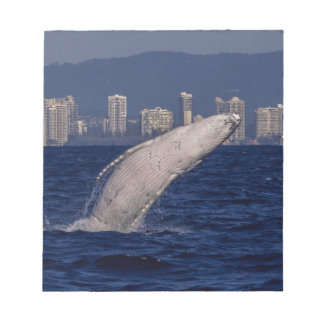 Humpback Whale Breach Surfers Paradise Australia Notepad