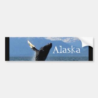 Humpback Whale Breaching; Alaska Bumper Sticker