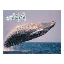 Humpback whale breaching, Alaska Postcard