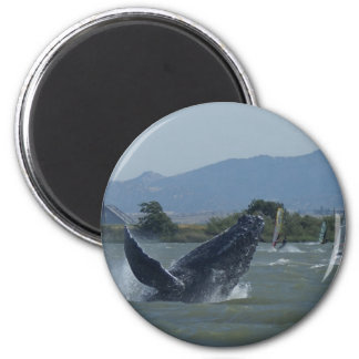 Humpback Whale Breaching by Windsurfers 2 Inch Round Magnet