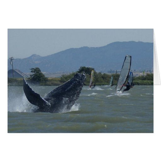 Humpback Whale Breaching by Windsurfers Cards