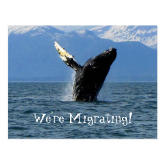 Humpback Whale Breaching; Change of Address Postcard