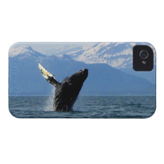 Humpback Whale Breaching iPhone 4 Case-Mate Case
