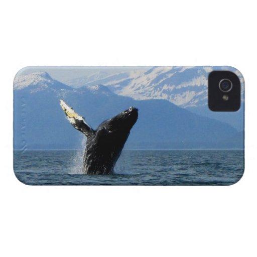 Humpback Whale Breaching iPhone 4 Case-Mate Case