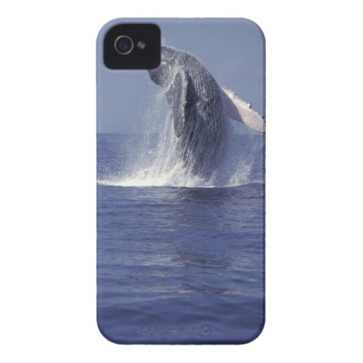 Humpback whale breaching (Megaptera Blackberry Bold Covers