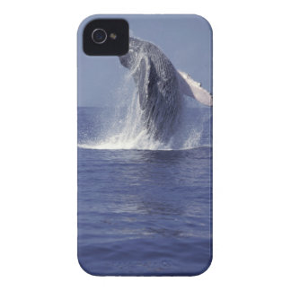 Humpback whale breaching (Megaptera iPhone 4 Cover