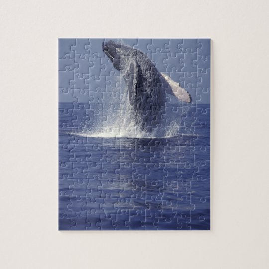 Humpback whale breaching (Megaptera Jigsaw Puzzle
