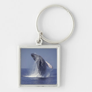 Humpback whale breaching (Megaptera Silver-Colored Square Keychain