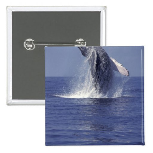 Humpback whale breaching (Megaptera Pinback Button