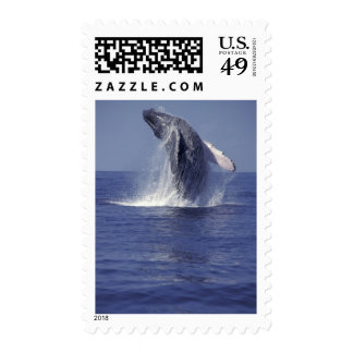 Humpback whale breaching (Megaptera Postage