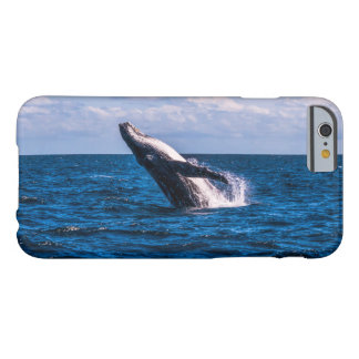 Humpback Whale Breaching off Surfers Paradise Barely There iPhone 6 Case