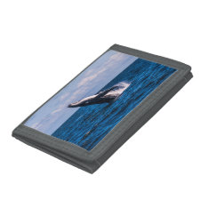 Humpback Whale Breaching Surfers Paradise Trifold Wallets at Zazzle