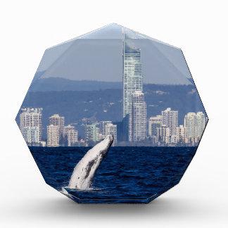 Humpback Whale Calf Breaching Surfers Paradise Award