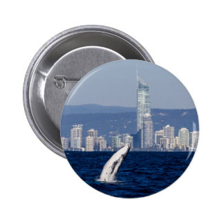 Humpback Whale Calf Breaching Surfers Paradise 2 Inch Round Button