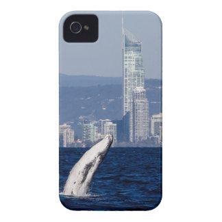 Humpback Whale Calf Breaching Surfers Paradise iPhone 4 Case-Mate Case