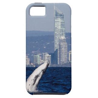 Humpback Whale Calf Breaching Surfers Paradise iPhone SE/5/5s Case