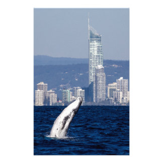 Humpback Whale Calf Breaching Surfers Paradise Stationery