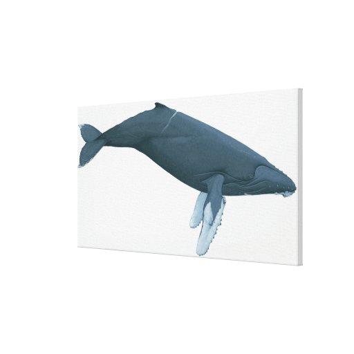 Humpback Whale Canvas Prints