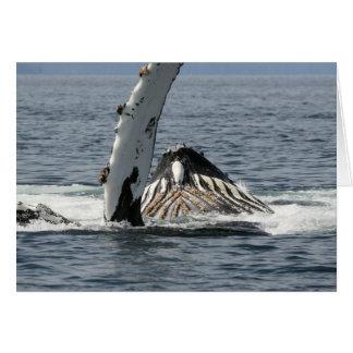 Humpback Whale Card