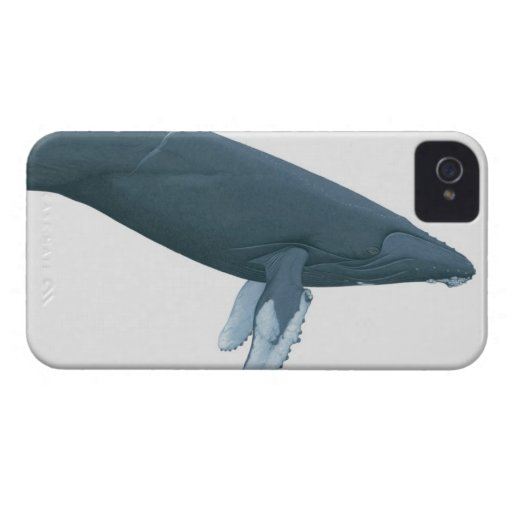 Humpback Whale iPhone 4 Cover
