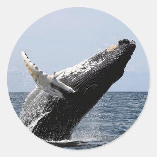 Humpback whale classic round sticker
