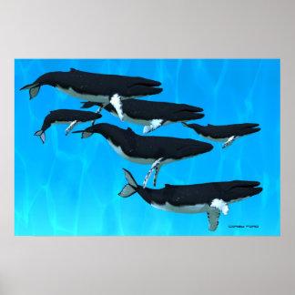 Humpback Whale Family Print