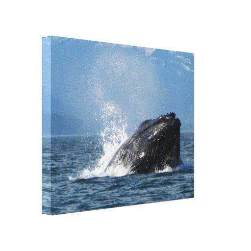 Humpback Whale Feeding Gallery Wrap Canvas