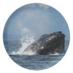 Humpback Whale Feeding Plates