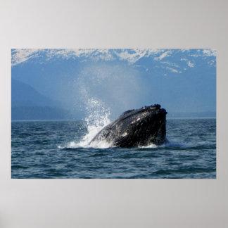 Humpback Whale Feeding Posters