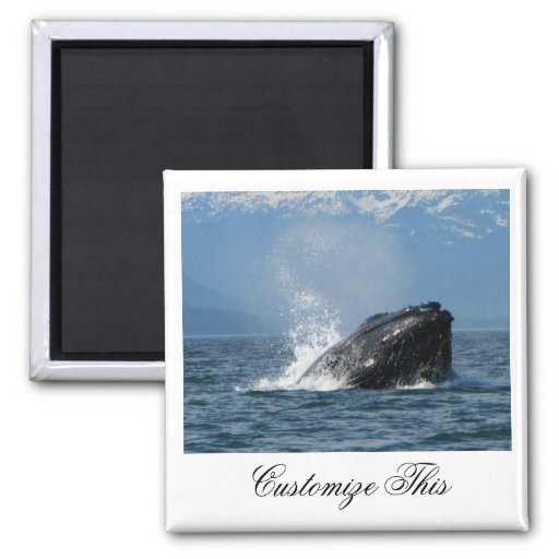 Humpback Whale Feeding Refrigerator Magnets