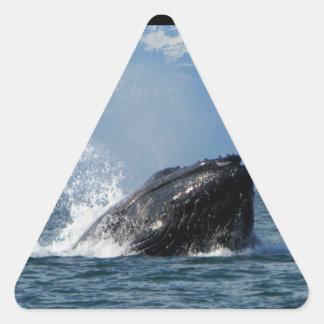 Humpback Whale Feeding Triangle Sticker