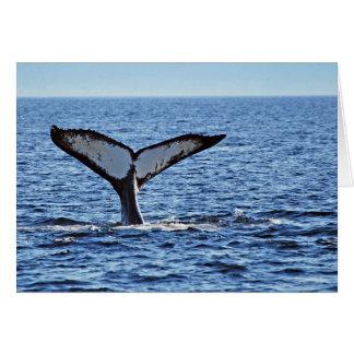 Humpback Whale Fluke, Victoria, BC Card