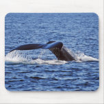 Humpback Whale Fluke, Victoria, BC Mouse Pads