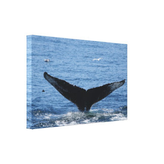 Humpback Whale flukes wrapped canvas print