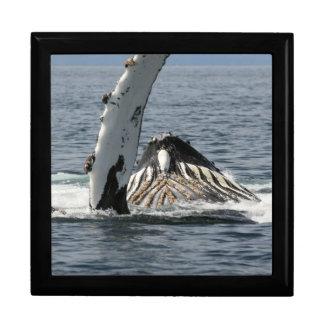 Humpback Whale Gift Box
