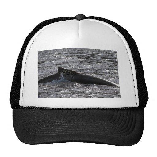 Humpback Whale Hats