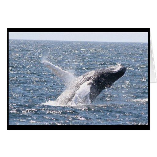 Humpback Whale I Card
