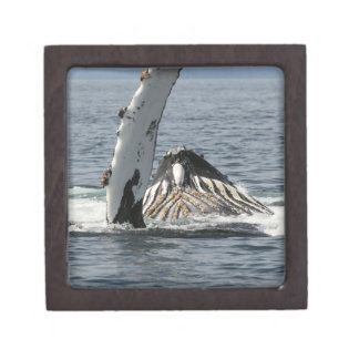 Humpback Whale Jewelry Box