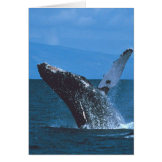 Humpback whale Jumping Card