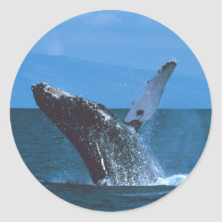 Humpback whale Jumping Classic Round Sticker