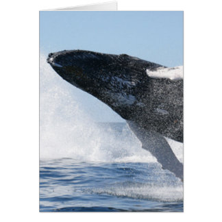 Humpback Whale Jumping High Card