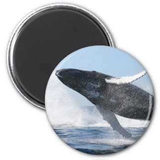 Humpback Whale Jumping High Refrigerator Magnets