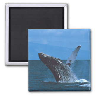 Humpback whale Jumping Fridge Magnet