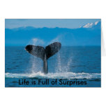 Humpback Whale, Life is Full of Surprises, Life... Cards
