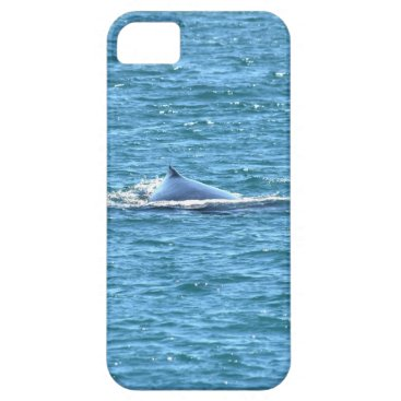 Beach Themed HUMPBACK WHALE MACKAY QUEENSLAND AUSTRALIA iPhone SE/5/5s CASE